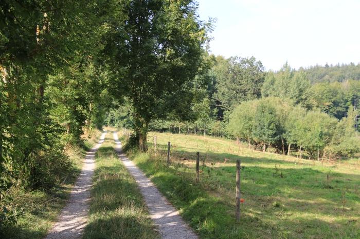 Feldweg an einem sonnigen Tag